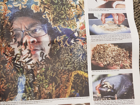 """""""Fly Farm"""" Straits Times Feature"""