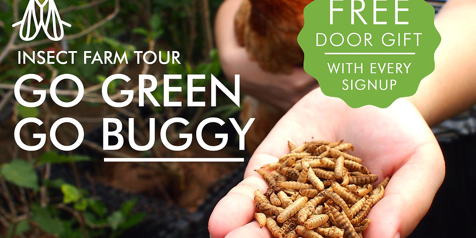 Go Green, Go Buggy! Insect Farm Tour (3 July, Saturday, 10:00am) - [FULLY BOOKED!]