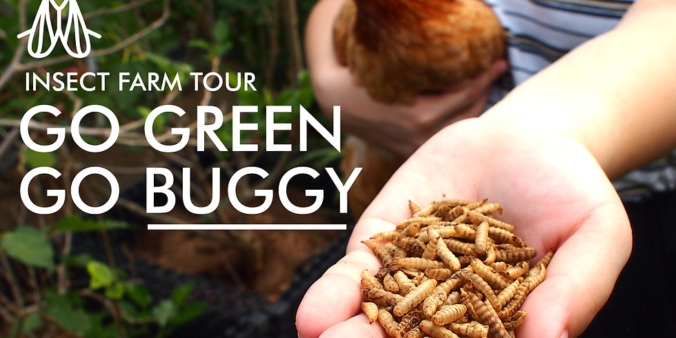 Go Green, Go Buggy! Insect Farm Tour (20th Nov, Saturday, 10:00am) - [6 slots left]