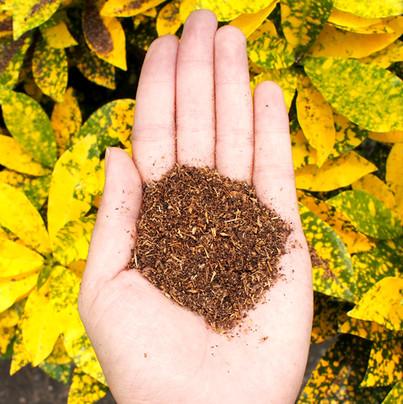 fert with yellow leaves for website.jpg