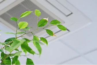 ficus-green-leaves-on-background-260nw-1