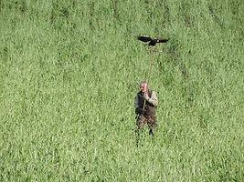 edinburgh falconry experience.jpg