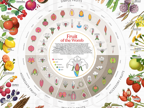 Presenting 'Fruit of the Womb: The Botanical Classification of Fruit'