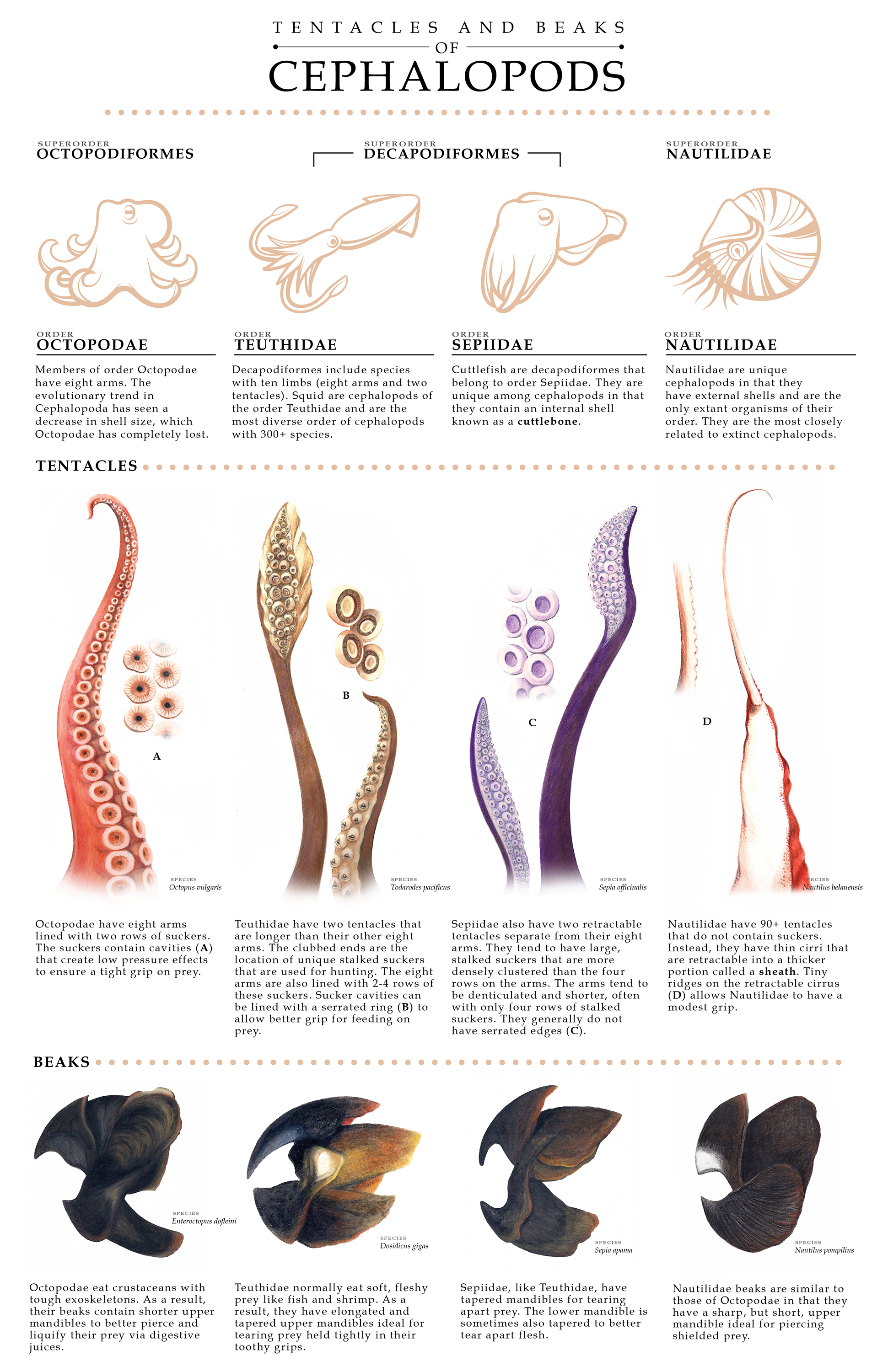 Tentacles and Beaks of Cephalopods