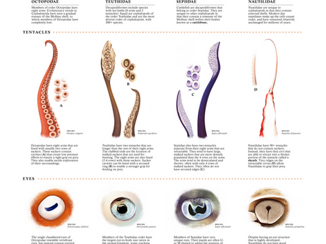 5 Year Anniversary of 'Tentacles and Beaks of Cephalopods'
