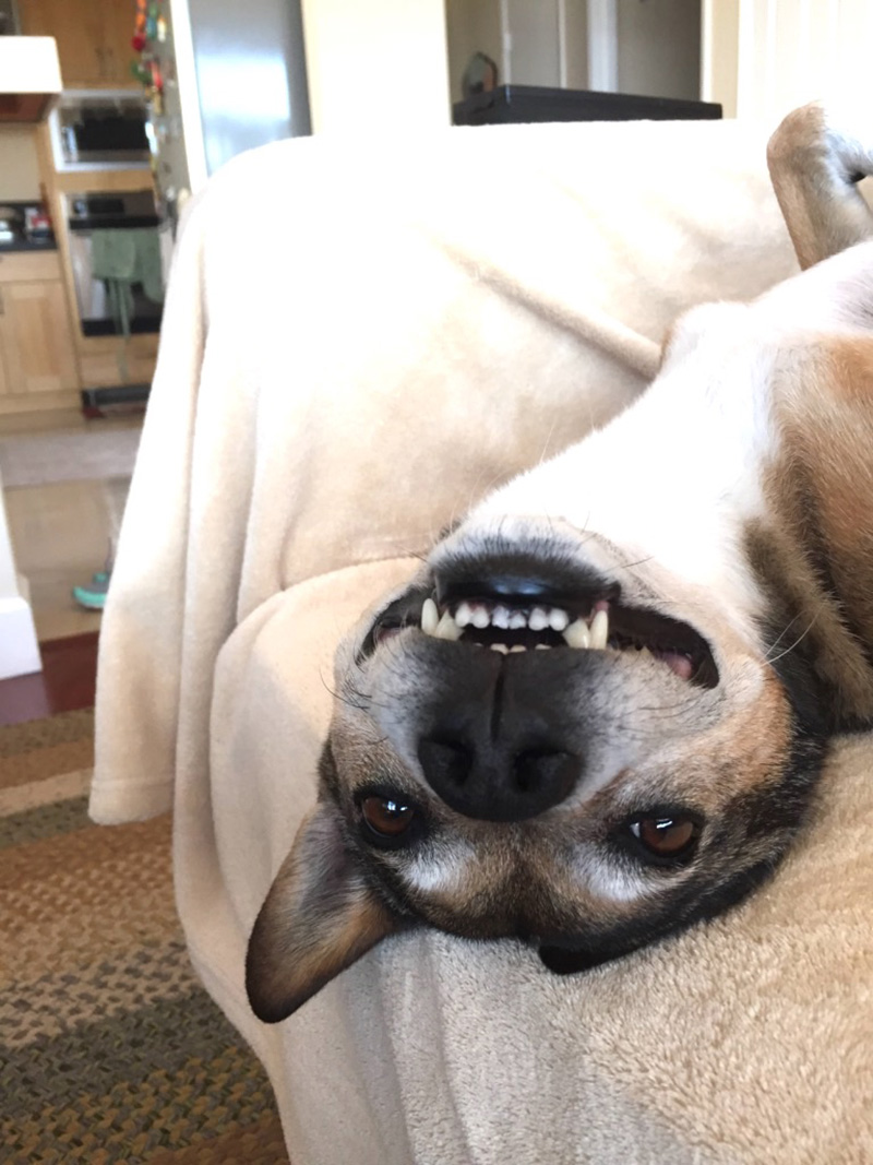 Rescue dog Barkley practices smiles for the children