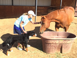 Training session for Animal Therapy Programs