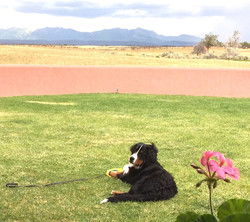 Playa takes in the view in CO