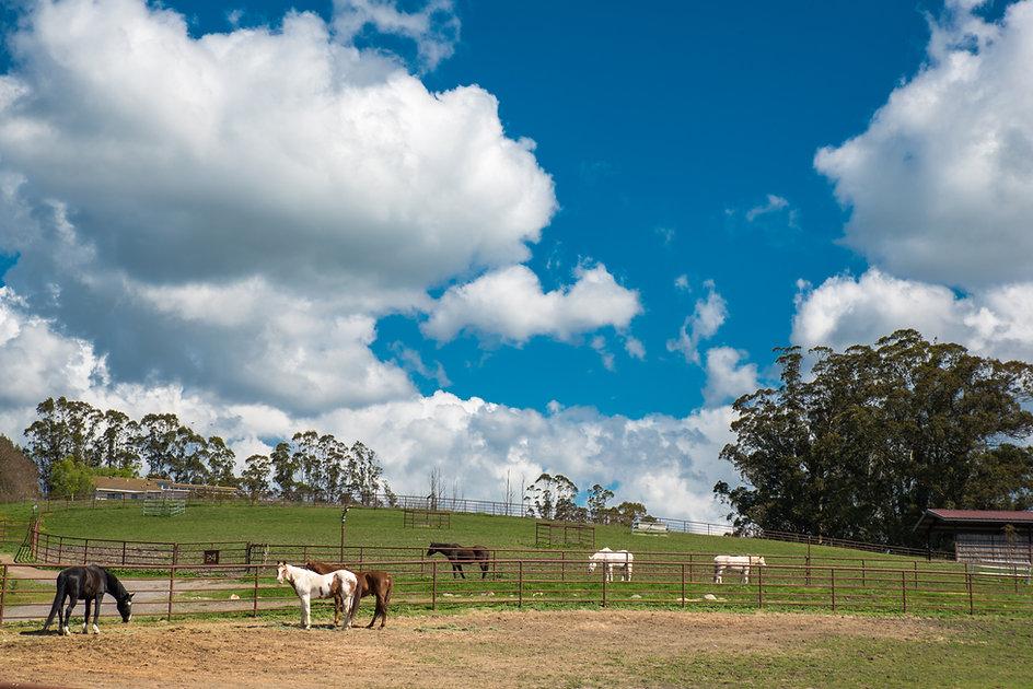 Retirement Pastures