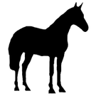 Horse%20Side%20Icon_edited.png