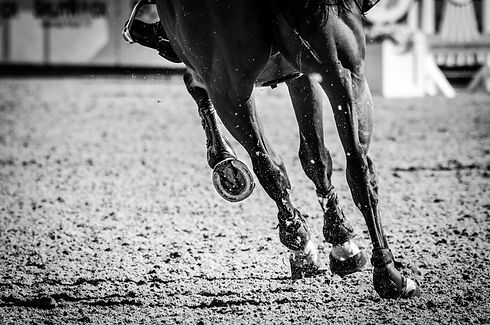 Equine Limbs, Show Jumper, Cantering