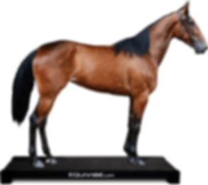 equivibe-horse-sideview-2.png