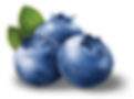 blueberries_PNG50.png