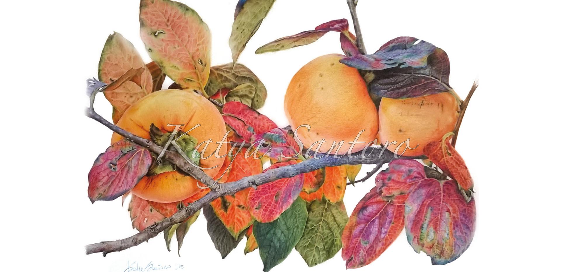Colori d'autunno su ramo di kaki