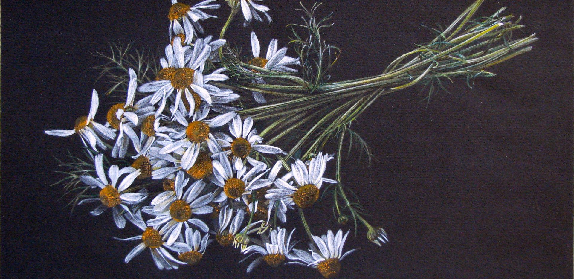 Bouquet di Camomille
