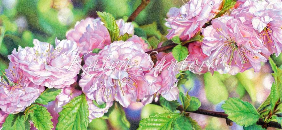 Sogno di Primavera (Dream of Spring)