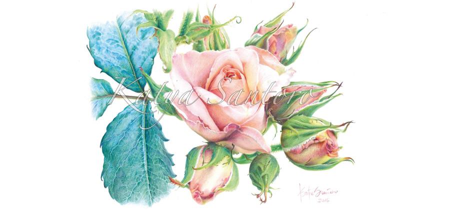 La Rosa Madre