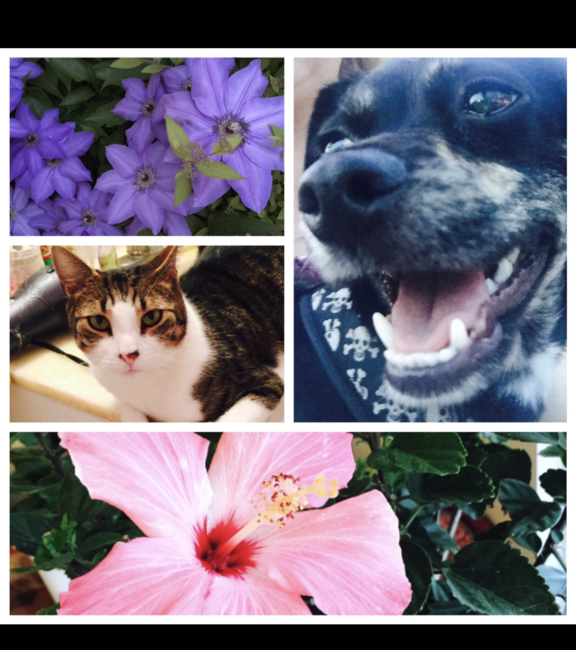 Collage of my Pets and Flowers