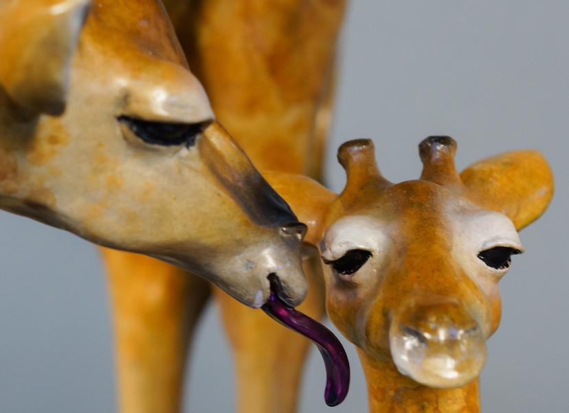 Giraffes have purple tongues.
