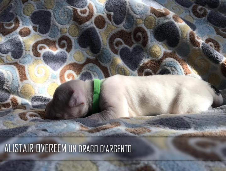 ALISTAIR OVEREEM A Drago D'Argento