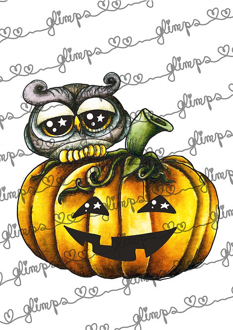 Owl on pumpkin