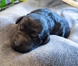 Kiki Newborn 2