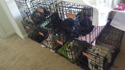 Sleeping in Crates