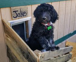 Jake 10 Weeks