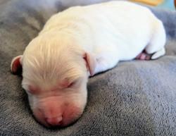 Marnie Newborn 2
