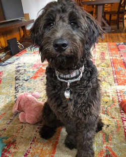 Georgia 6 Months Old