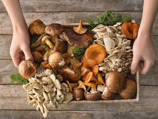 champignon-stimuler-concentration-cervea