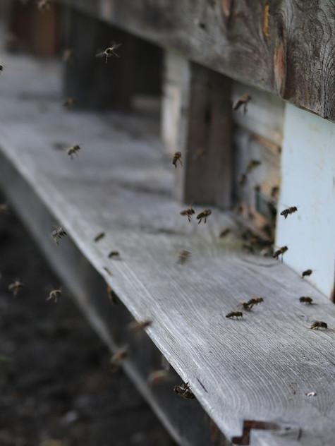 Produits de la ruche