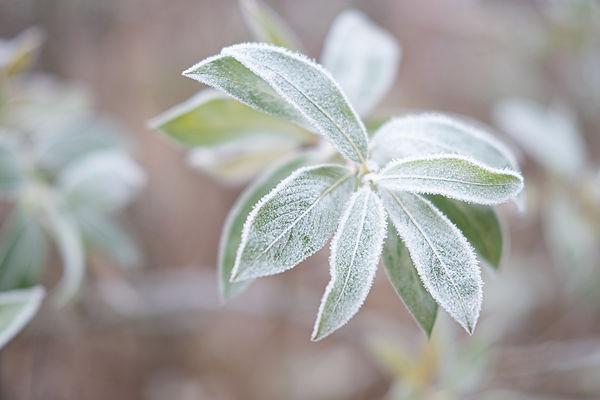 winterplanze.jpg
