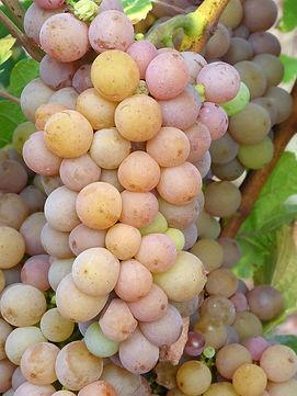 grapes-1712719_960_720.jpg