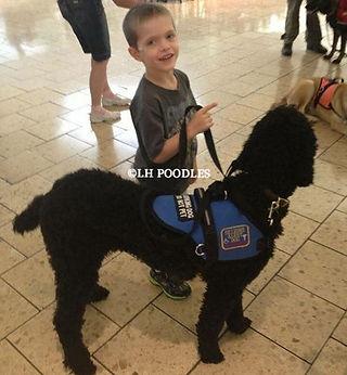 Colorado Poodles