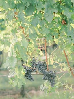 Fall Stone Tower Winery