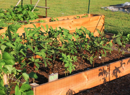 Our Church Garden - Growing Fresh Food to Grow a Healthy Community