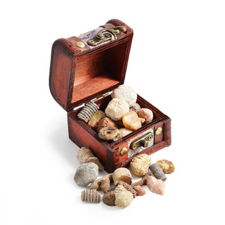 Fossil Chest