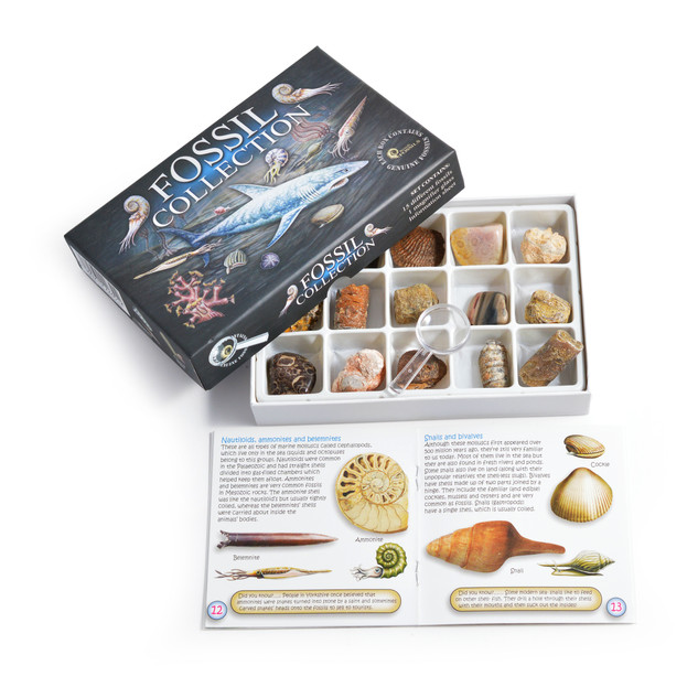 Fossil Collection With Booklet
