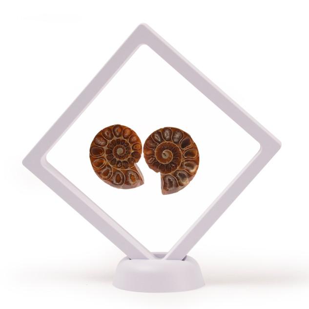 White Framed Cut & Polished Ammonite