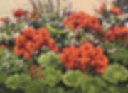 1112r-Geraniums-Gallery-XII.jpg