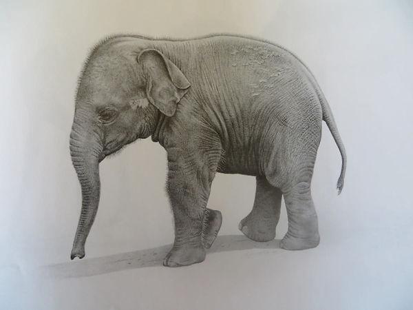 Baby elephant drawing, from Jon Isaacs.jpg