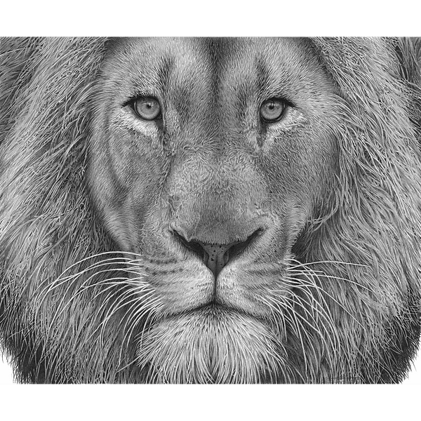 lion potrait tif.png