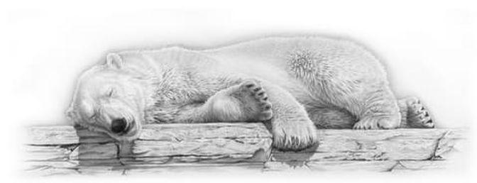 Arctic Dreams (Polar Bear)-1.jpg