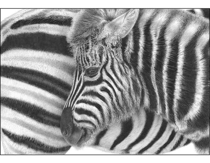 Black and White by David Dancey-Wood.jpg