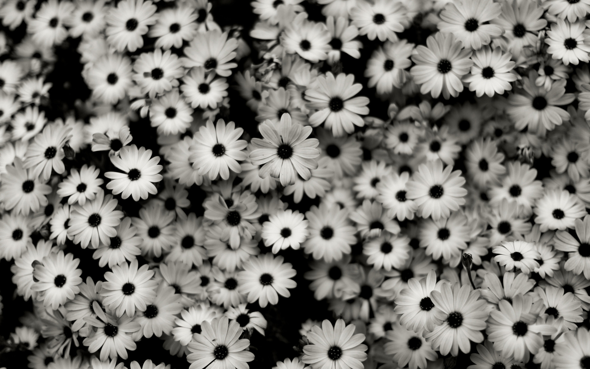 black-white-background.jpg