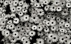 black-white-background.jpg