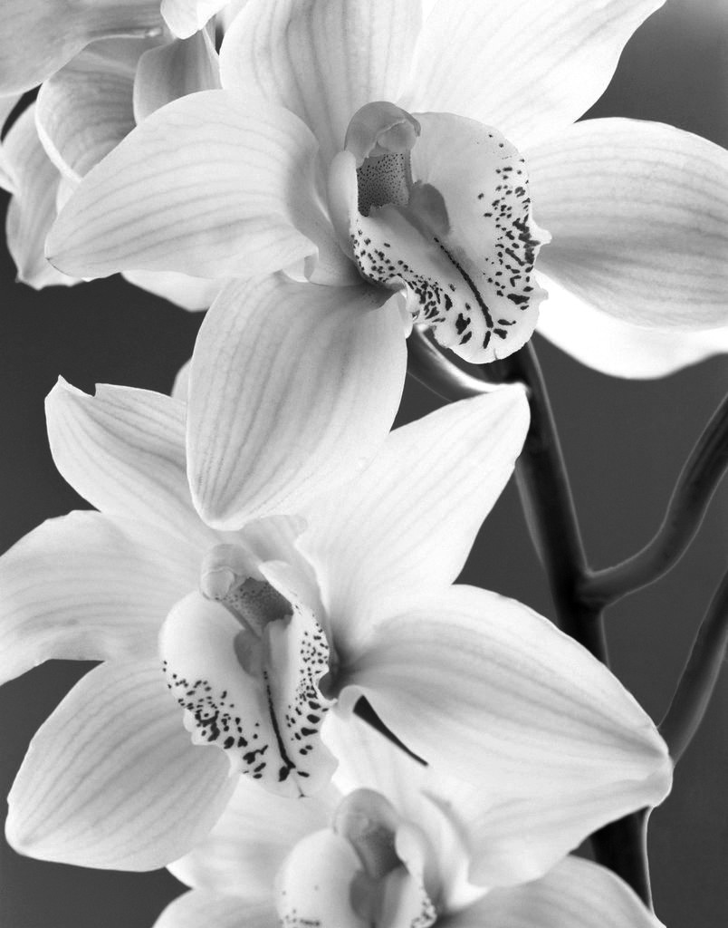 black-and-white-flower-photography.jpg