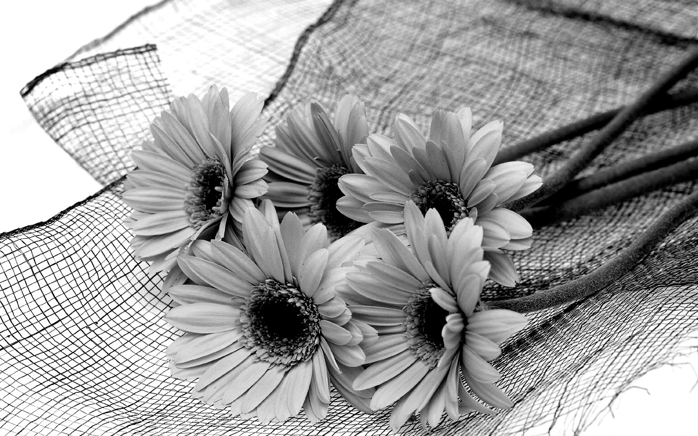 black_and_white_flower.jpg