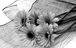 black_and_white_flower.jpg